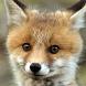 cute fox wallpaper by best wallpaper inc