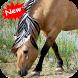Horse by Seaweedsoft