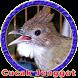 Master Cucak Jenggot MP3 by Goodapps Project
