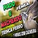 Fêmea de trinca ferro no viveiro by Raja Burung App