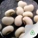 Bean Pests by Agrimind Apps