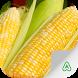 Corn Pests by Agrimind Apps