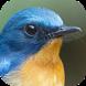 Kicau Burung Tledekan by KicauApp