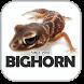 BIGHORN by onephyo