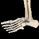 Human Leg 3D by Trendyworks LLC