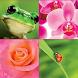 Amarante Fleurs by Apptineo