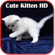 Cute Kitten HD Wallpaper by ehraman
