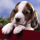 beagle wallpapers by Dark cool wallpaper llc