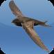 Kicau Burung Walet by KicauApp