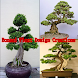 Bonsai Plant Design Creations by karnodroid