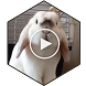 Bunny Video Wallpaper Pro by Harvey Wallpaper