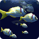 Fish Schooling VR by Double Digital Studios