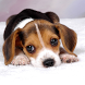 Free Puppy Dog Wallpaper by Best Hot Sales Store