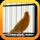 Kicau Dan Terapi Kacer by ard app