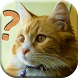 Cats Quiz - All about Cats by Casual Games and Apps