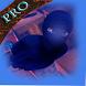 New Hero Burka Adventure