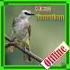 Burung Trucukan by paijo dev
