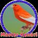 Master Kenari MP3