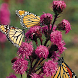 free butterfly garden by Dark cool wallpaper llc