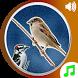 Bird Calls Sounds Ringtones by droidpixel