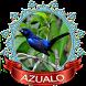 Azulão chilrear bonito by Canto de Brazileiros