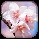 Sakura Live Wallpaper by Wasabi