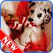 Cute Puppy Wallpaper HD by Danu Rahmawanda 643