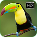 Toucan Bird Calls and Sounds by kicaumania suara burung