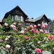 Japan:Kyu-Furukawa Gardens by takemovies