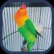 Masteran Lovebird Ngekek Offline Mp3 by Krungu Mobile