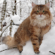 Siberian Cat Wallpapers by sweetkitty