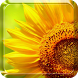 Sunflower Live Wallpaper by Live Wallpaper Free