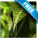 Leaf Water Drop free lwp by Infomedia BH