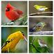 Kicau Master Burung Offline by Songbird Apps