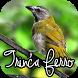 CANTO DE TRINCA FERRO by MusickuApp