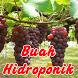 Aneka Buah Hidroponik by seemala