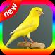 canto canario belga by canto de app