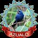 Azulão chilrear áudio by Canto de Brazileiros