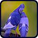Bird Wallpapers by popularp