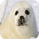 Seal Wallpapers by Dabster Software
