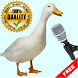 Birds Sounds for Kids by Digital Application