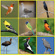 South American Birds by RamkumarApps