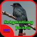 Suara Burung Srigunting Juara