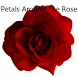 Petals Around The Rose by Miracle a/s