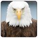 Eagle Wallpaper by Twinsapp