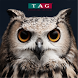TAG Superannuation Specialists by Digital Disruption Solutions Pty Ltd