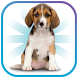 Animals and Pets For Kids by Simple Tap Games