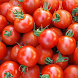 Tomatoes Wallpapers by danilzaharov