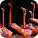 Flamingo video wallpapers by AlexAlerion