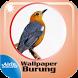 Gambar Burung Wallpaper Cantik by Airindev